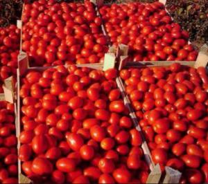 День помидора в Одессе